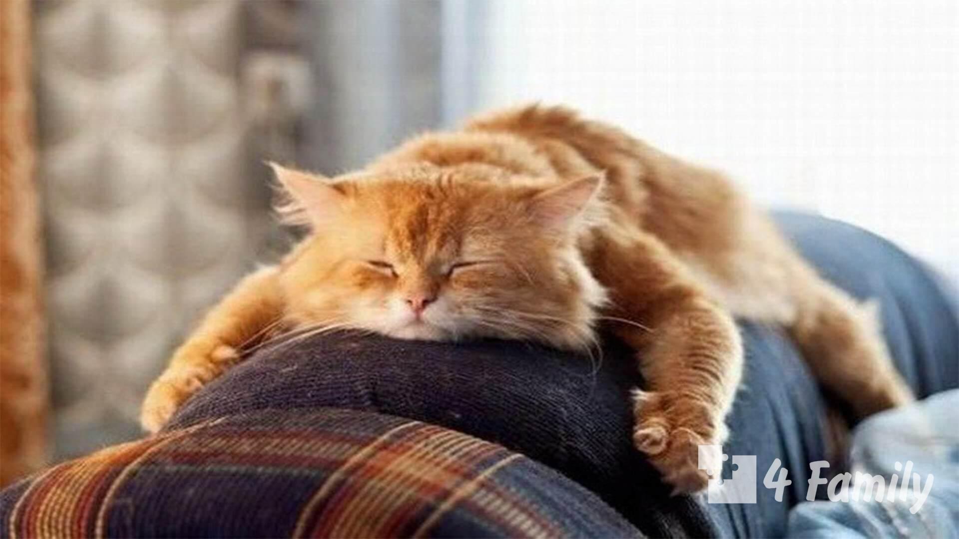 5 эффективных методов борьбы с ленью помогут стать более продуктивным