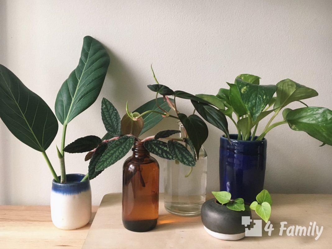 Размножение цветов в домашних условиях