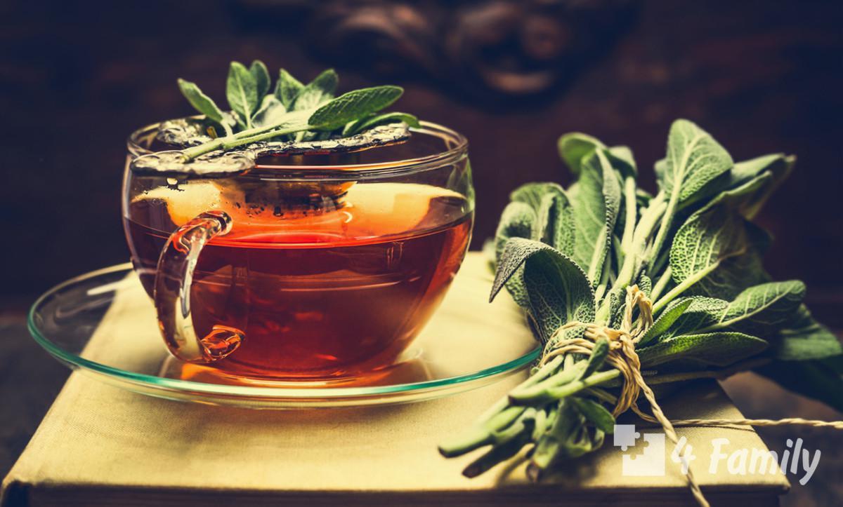 Чай с шалфеем полезные свойства и противопоказания