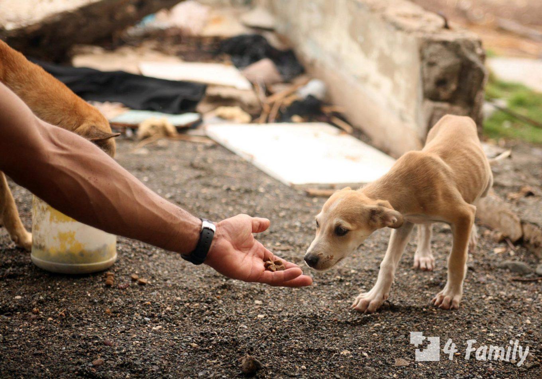 Помощь животному, оказавшемуся на улице
