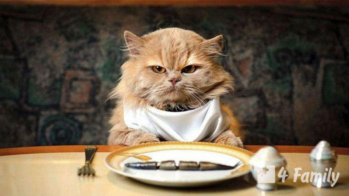 Чем кормить кошку?