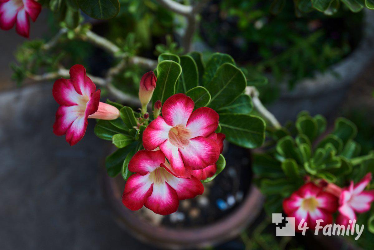 Фото. Размножение цветов в домашних условиях