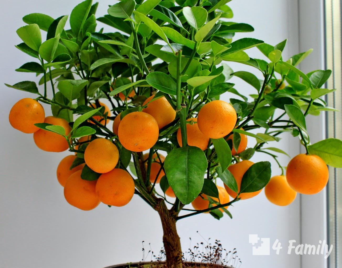 Фото. Какие фрукты можно вырастить дома
