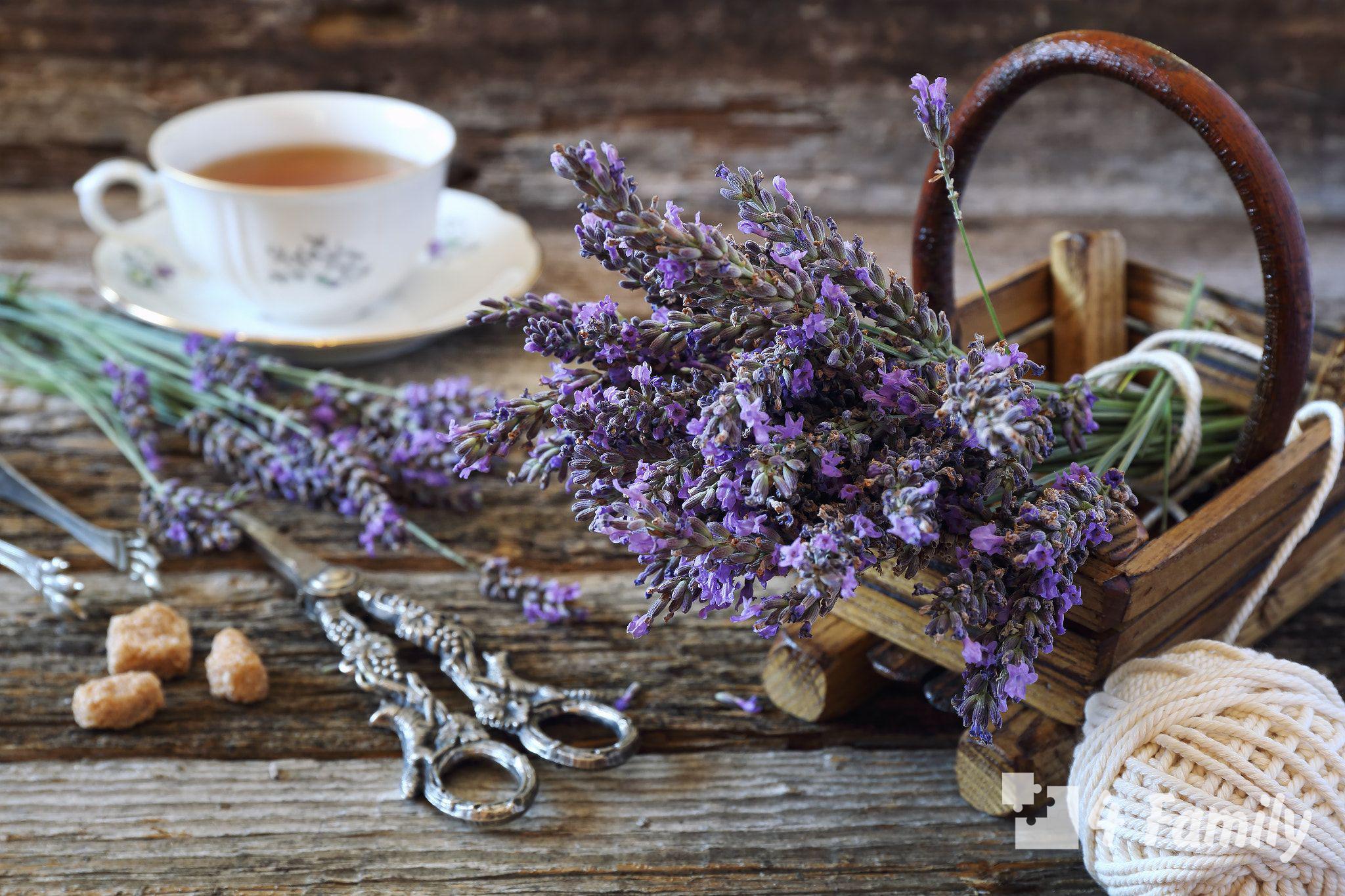 Лаванда в чай полезные свойства и противопоказания