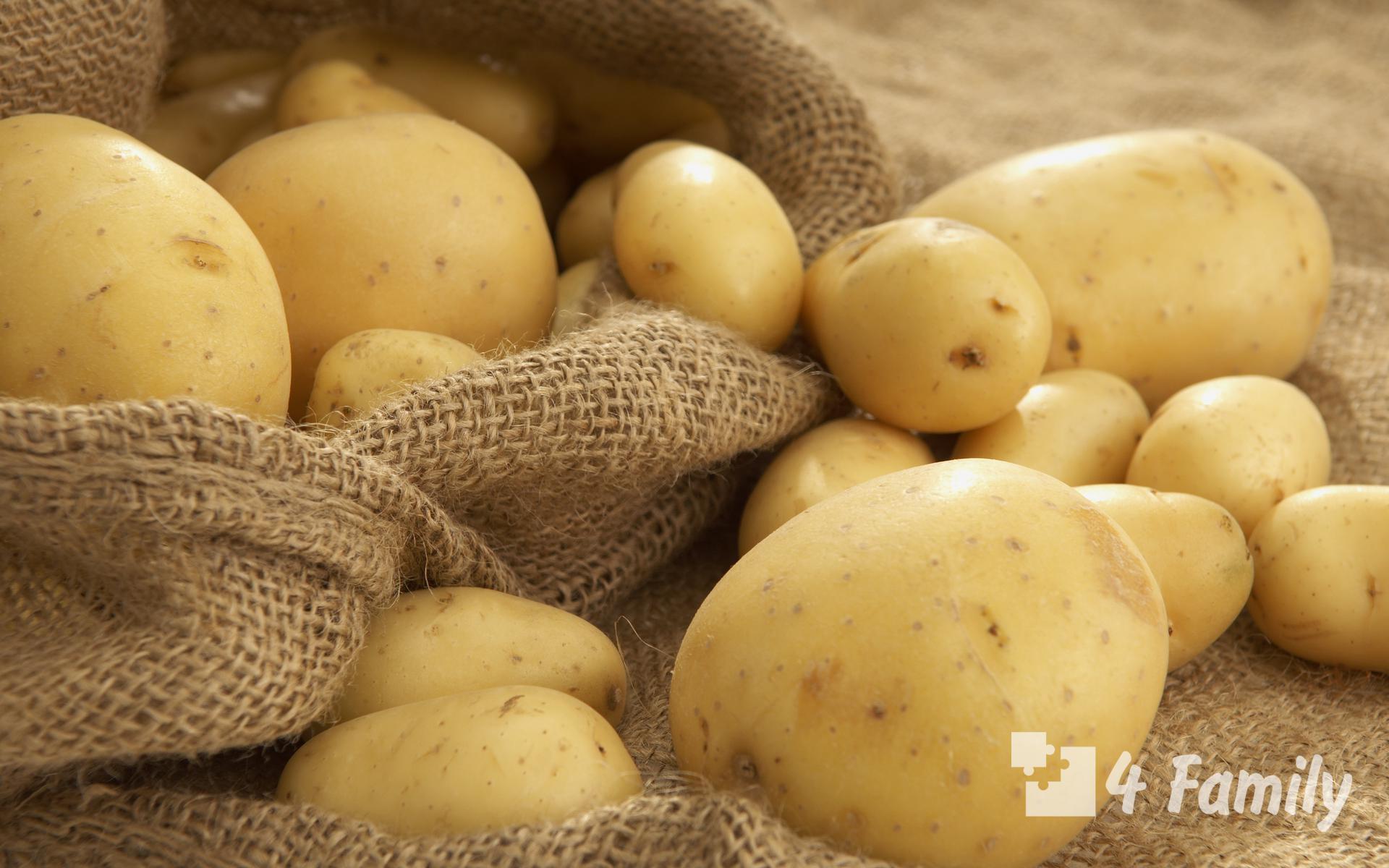 Фото. Хороший урожай картофеля