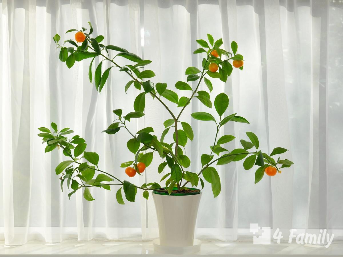 Какие фрукты можно вырастить дома