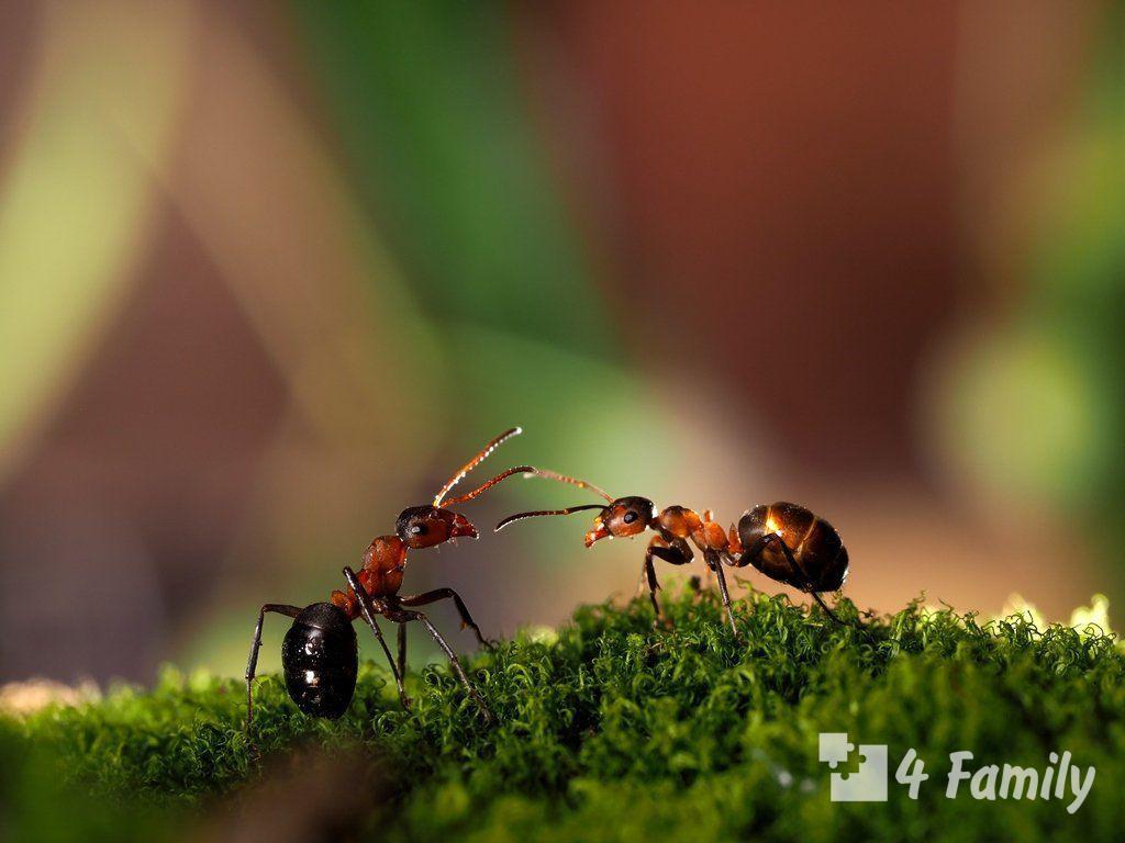 Фото. Как избавиться от муравьев в огороде