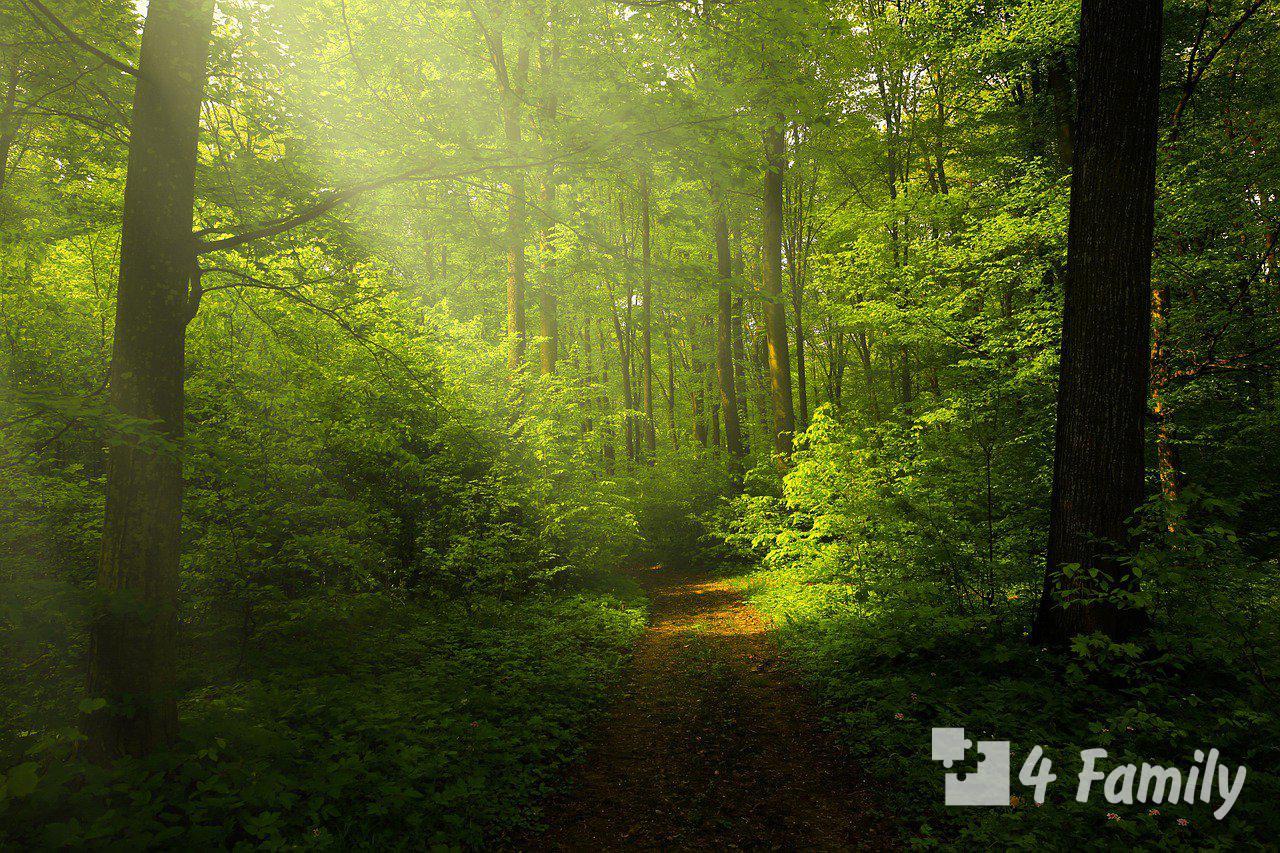 Лес как вдохновение