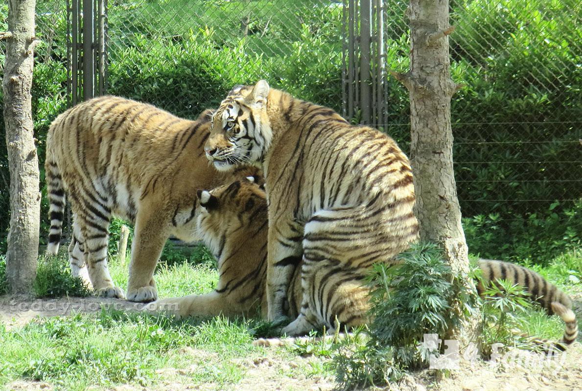 4family Шанхайский парк диких животных