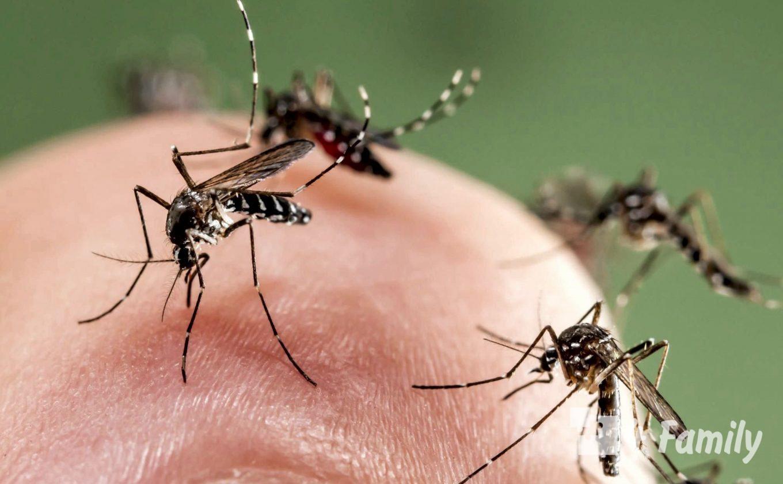 4family Как бороться с комарами