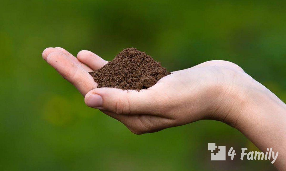 4family Как определить кислотность почвы на даче