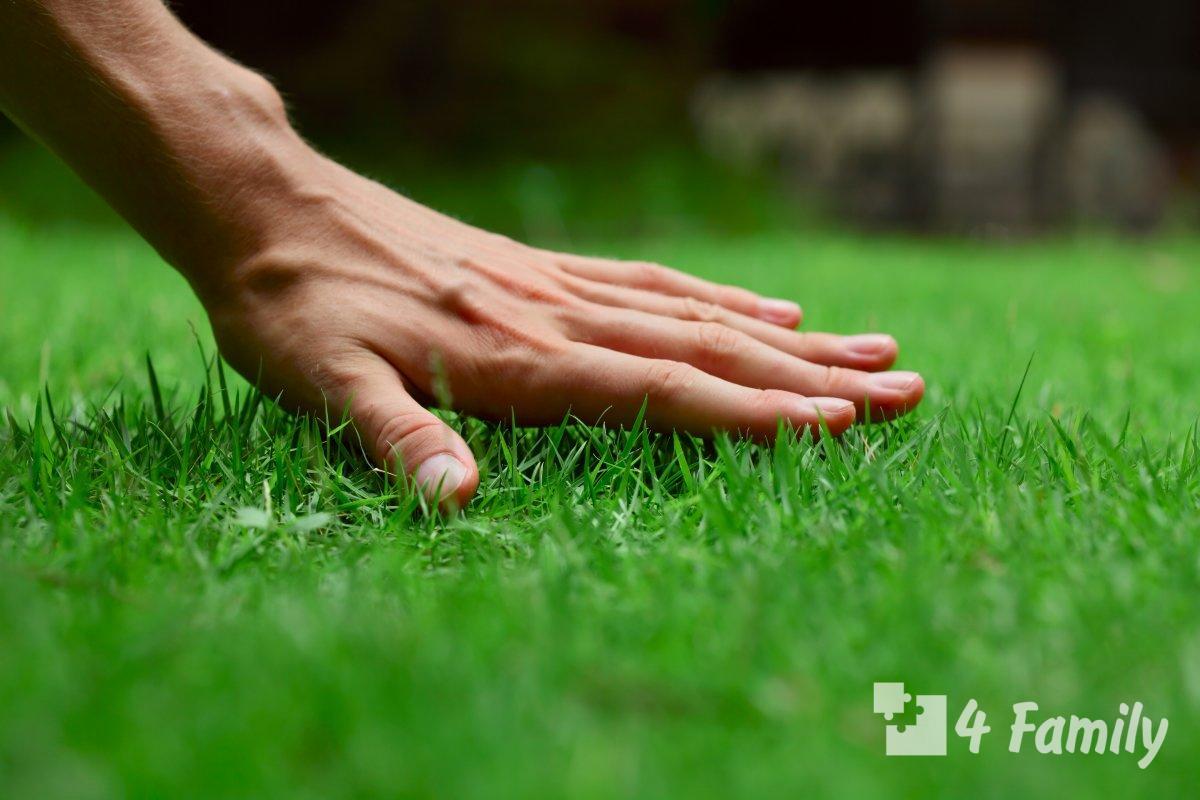 Лучший газон для дачи