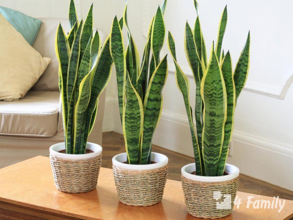4family Комнатные растения для идеального микроклимата в квартире