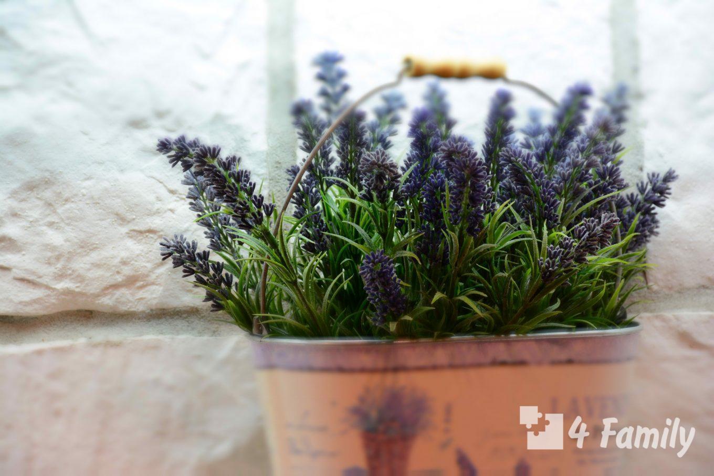 4family Цветы и растения, которые помогают хорошо спать