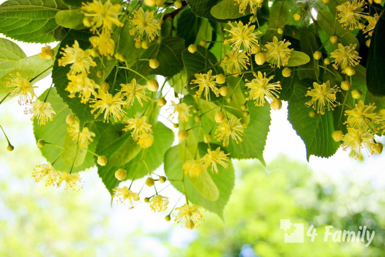 4family Что посадить в саду чтобы весь год был зеленым