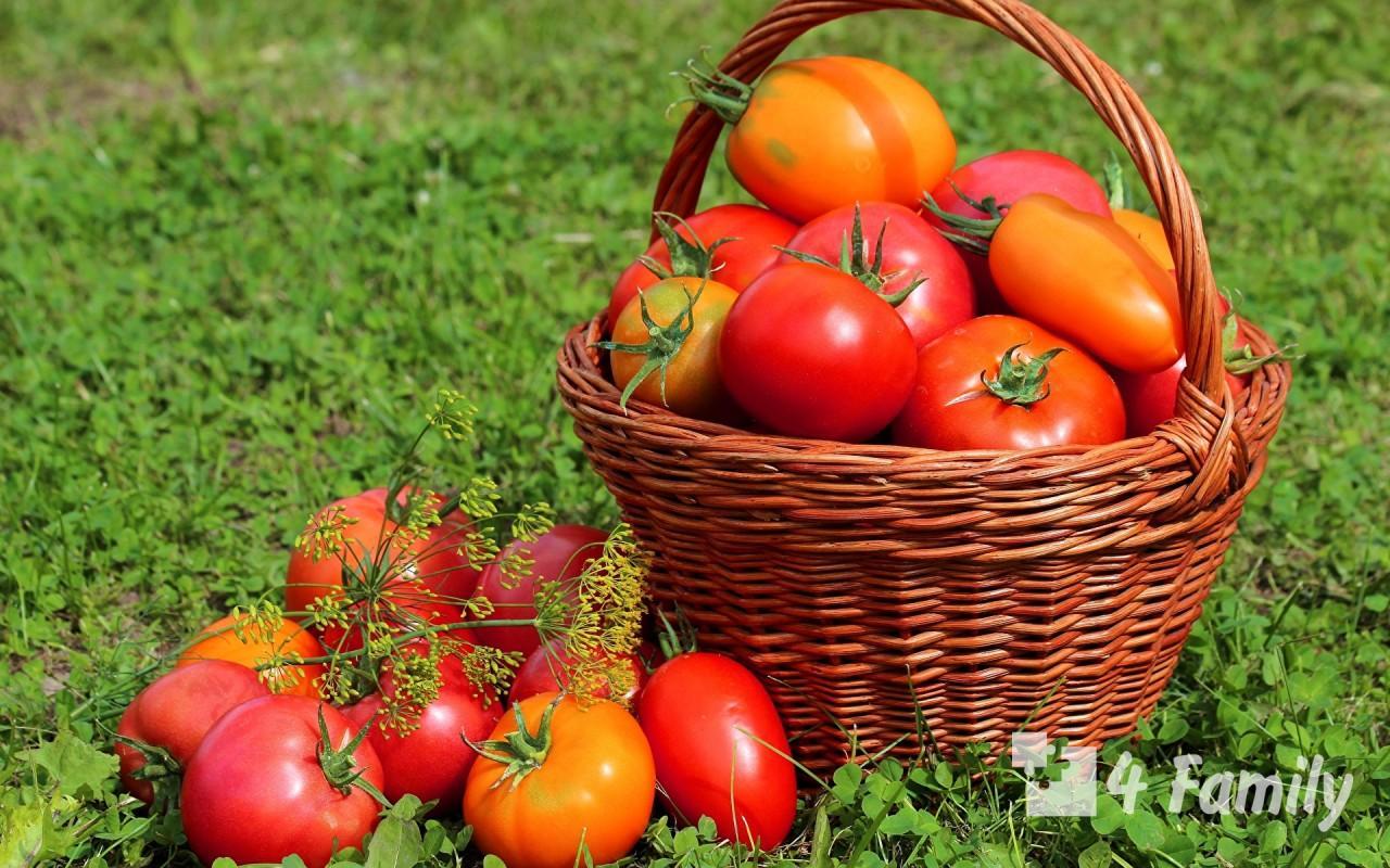 4family Как вырастить хороший урожай томатов