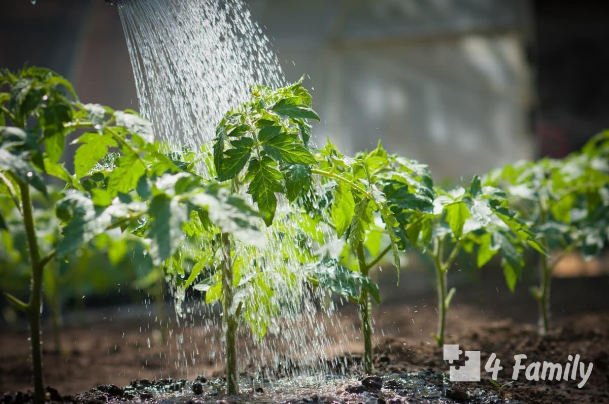 Секреты успешного полива в огороде