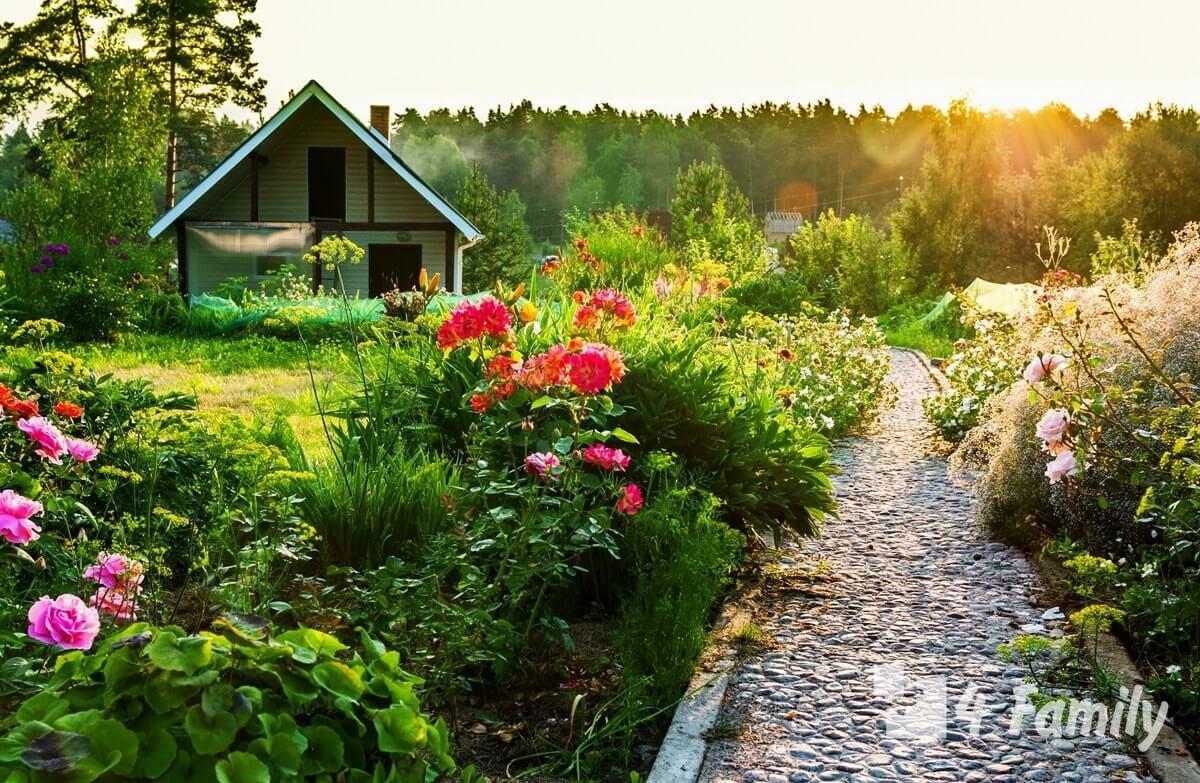 Что посадить в саду чтобы весь год был зеленым