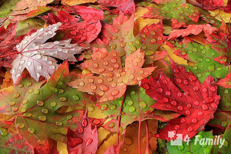 Как использовать опавшие листья в саду или на участке