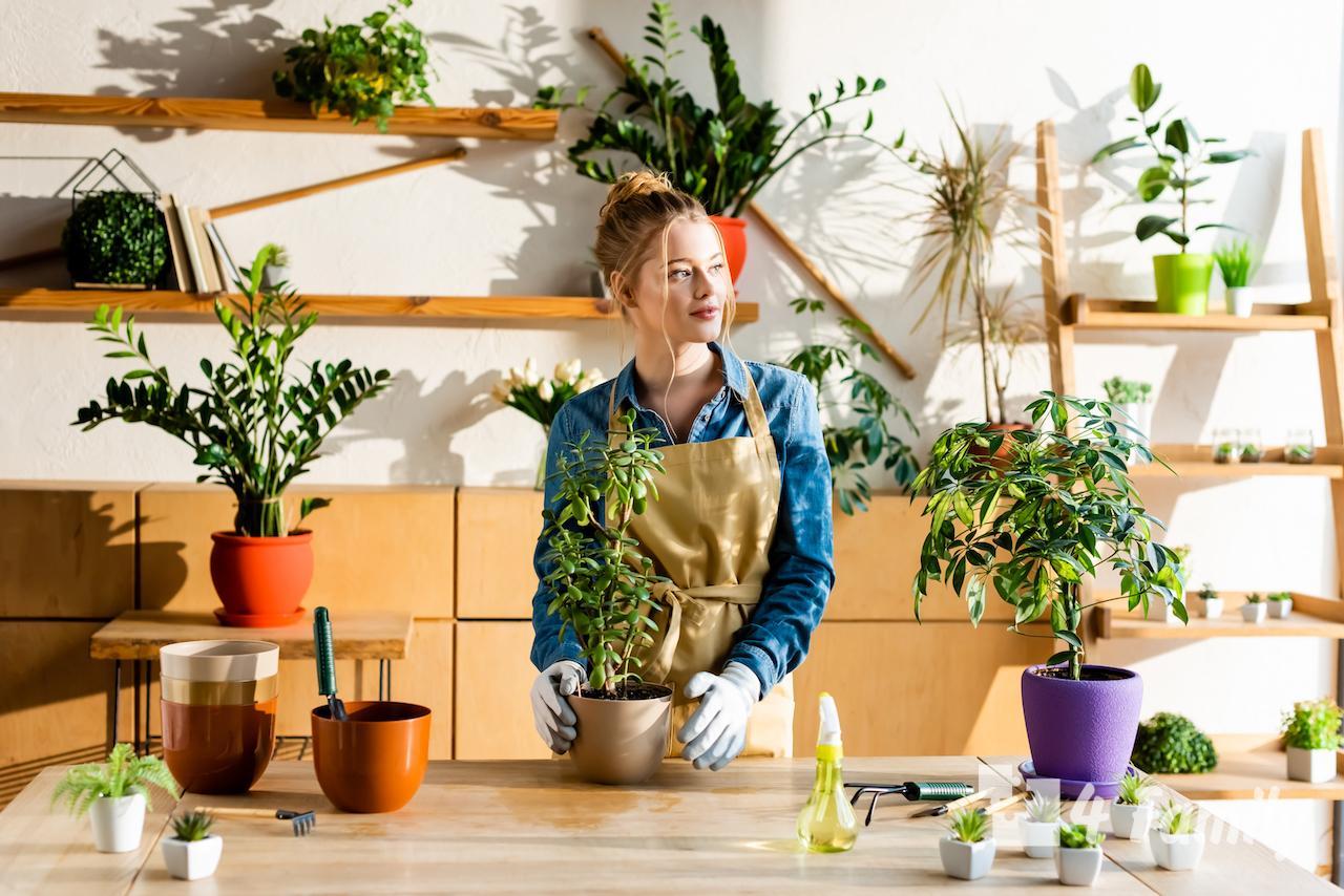 Комнатные растения, которые повышают влажность в доме