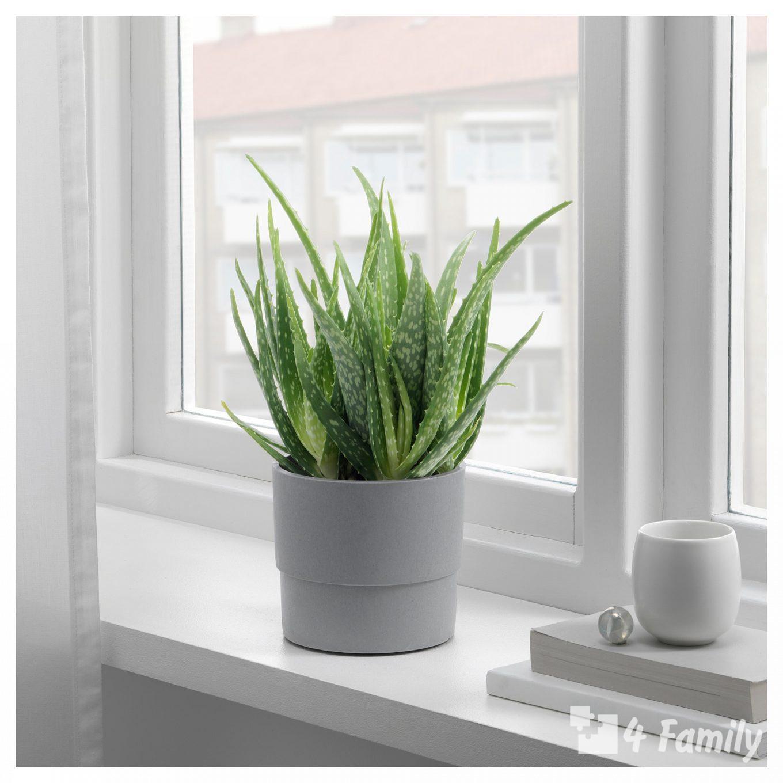 4family Какие комнатные растения помогают быстрее уснуть