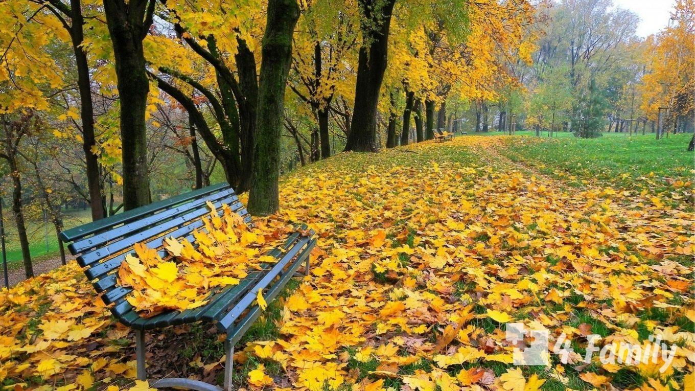 Фото, Как использовать опавшие листья