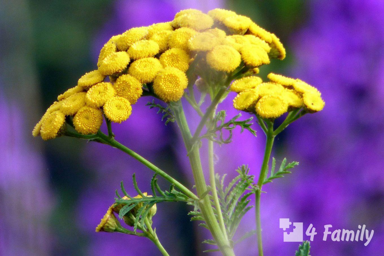 4family Какие растения избавят от комаров