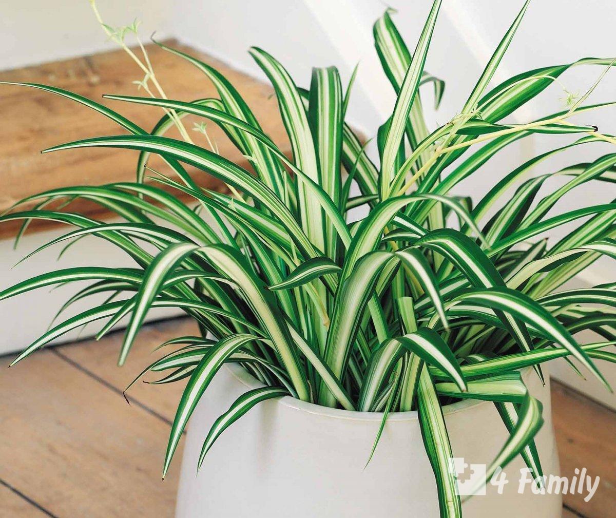 Фото, Комнатные растения, которые повышают влажность