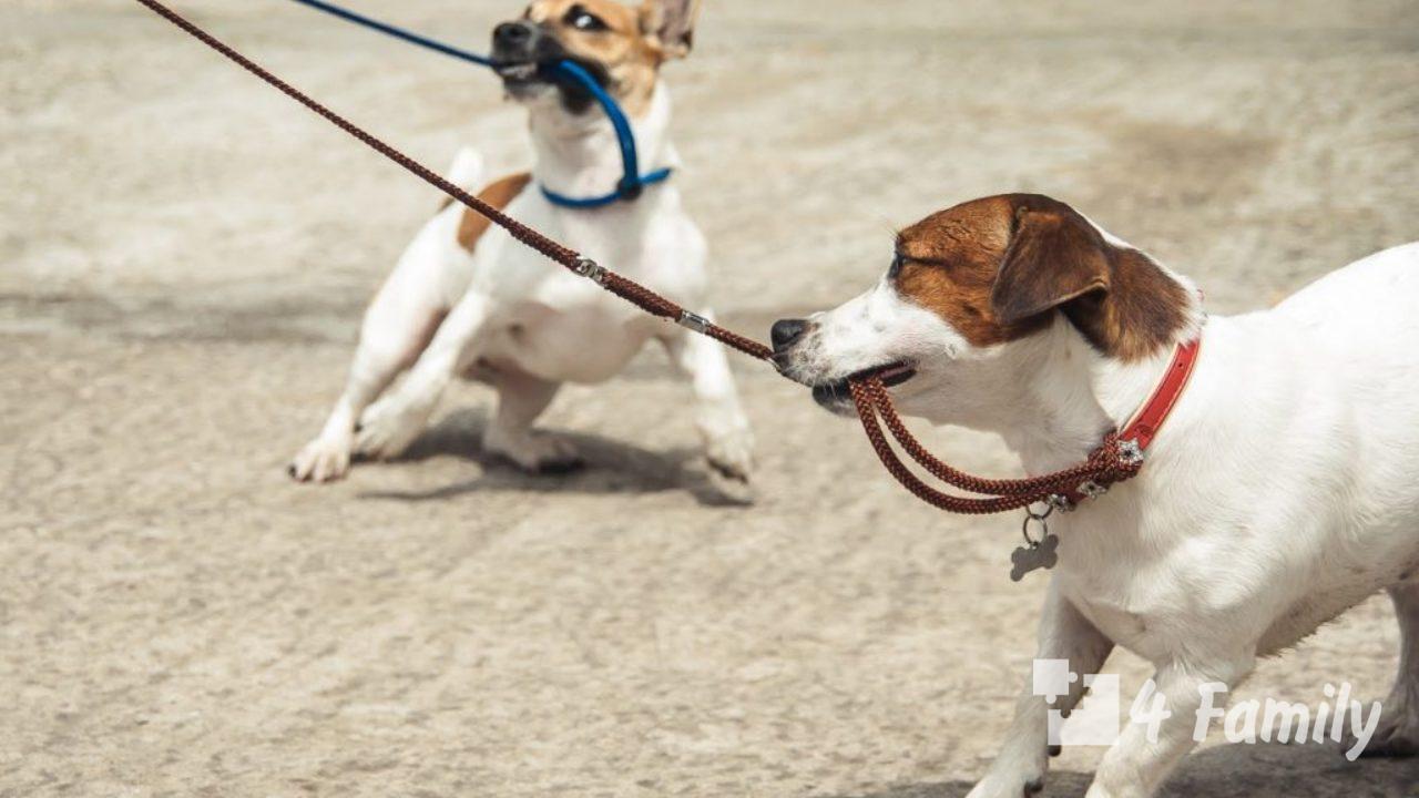 Как выбрать поводок для собаки