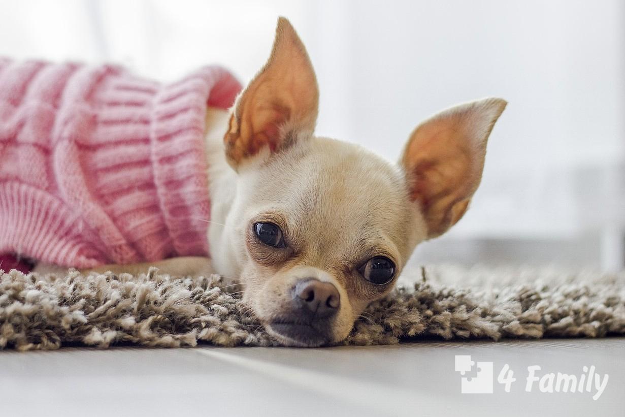 Как выбрать собаку для квартиры