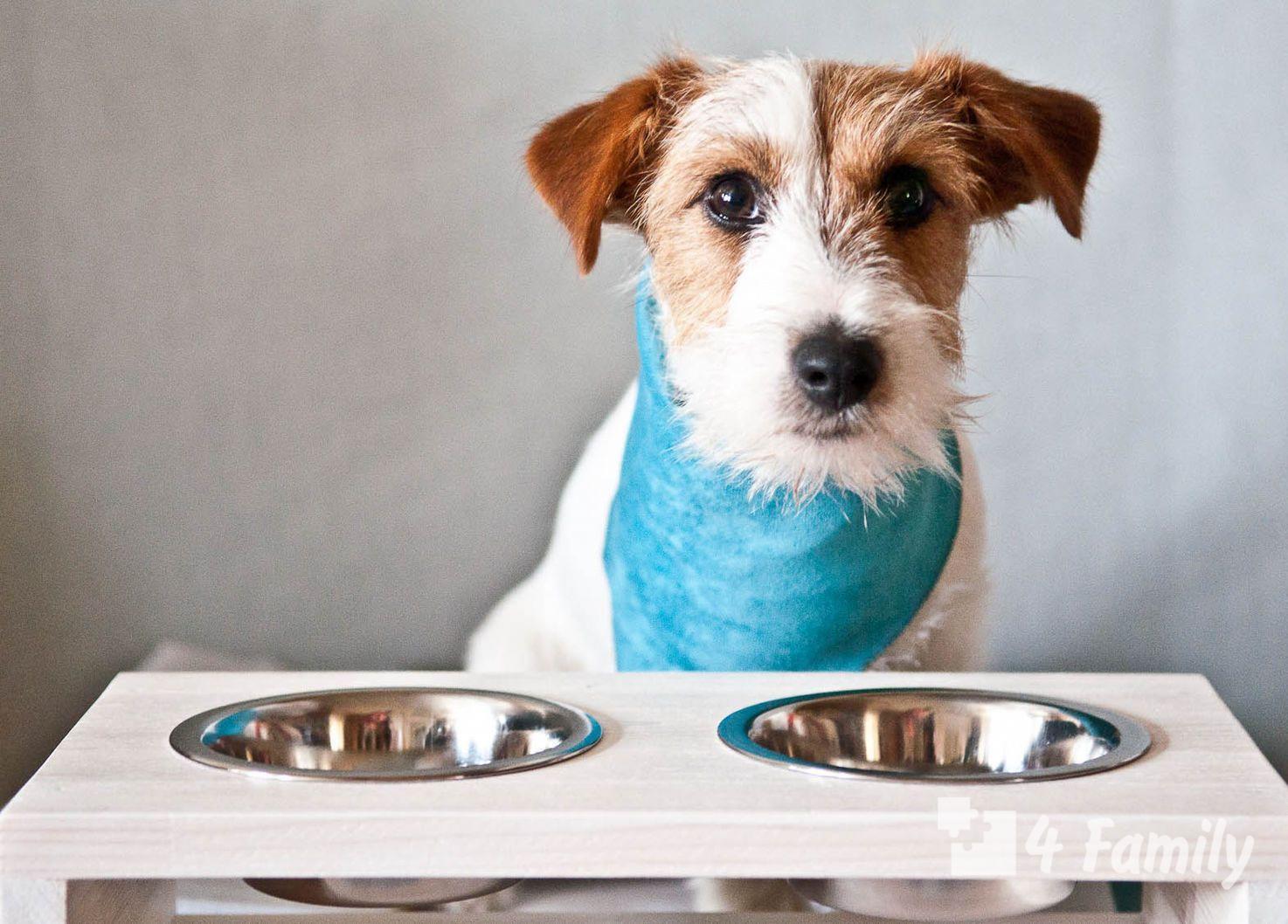 как выбрать миску для собаки