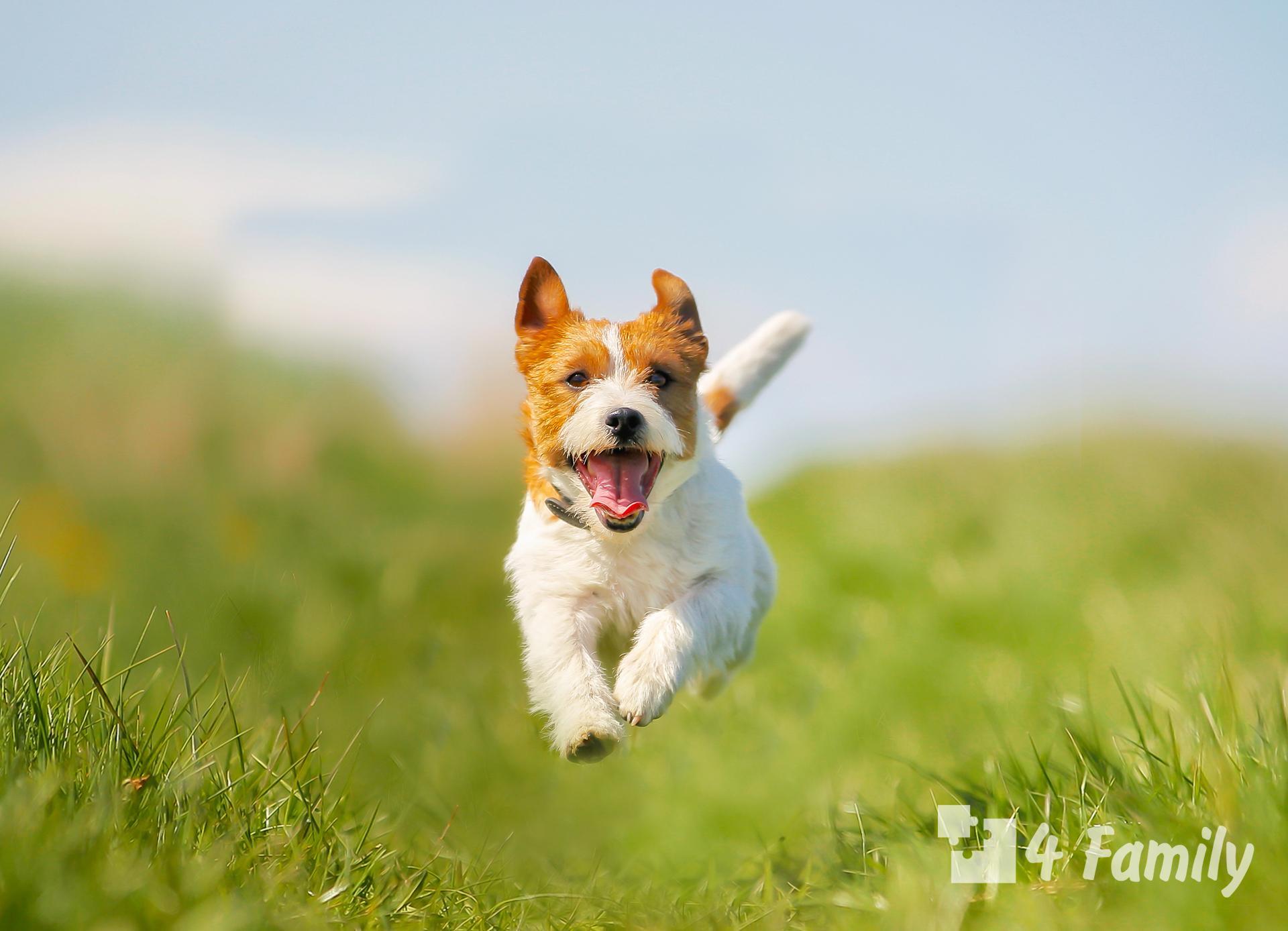 Как выбрать кличку для собаки