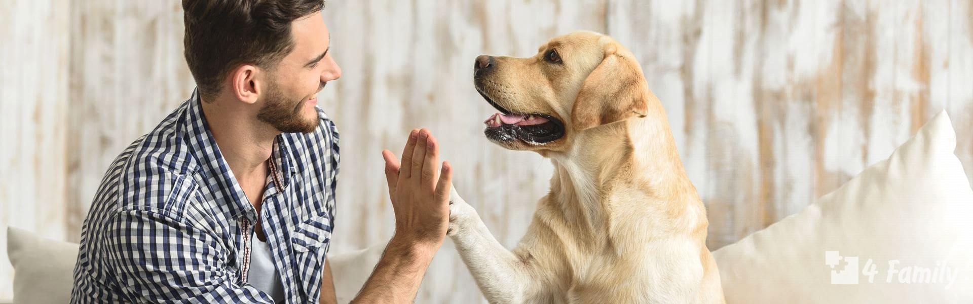 Как выбрать породу собаки для дома