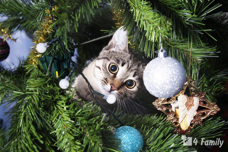 5 способов уберечь елку от кота
