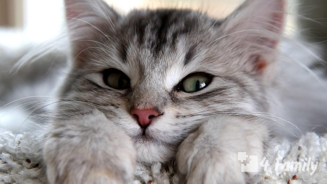 Какие болезни лечат кошки