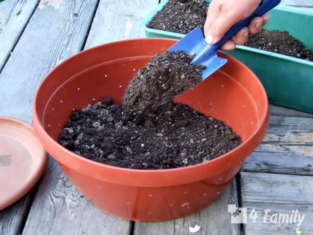 Идеальная почва для растений – 3 основных совета