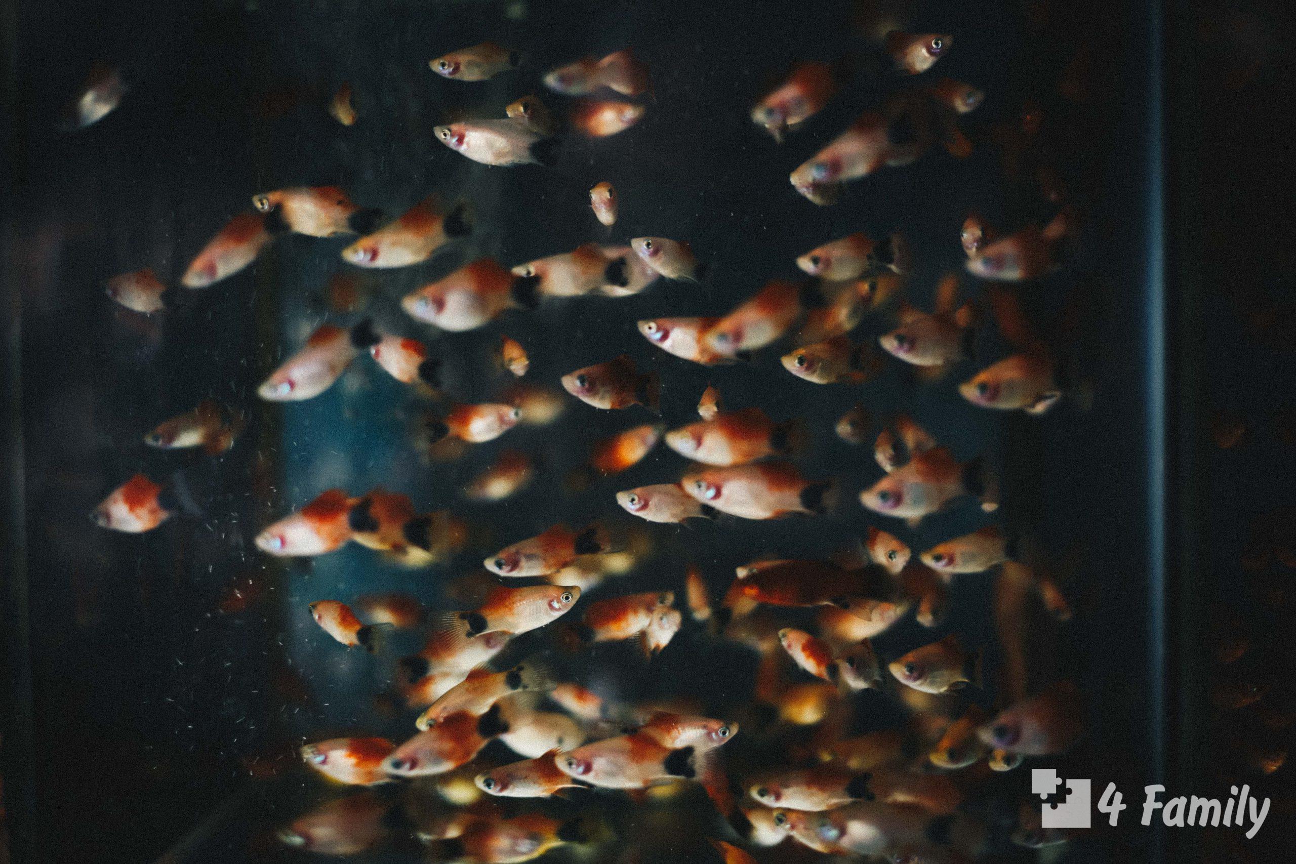 Какой аквариум лучше для дома