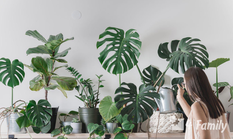 Комнатные растения, за которыми легко ухаживать