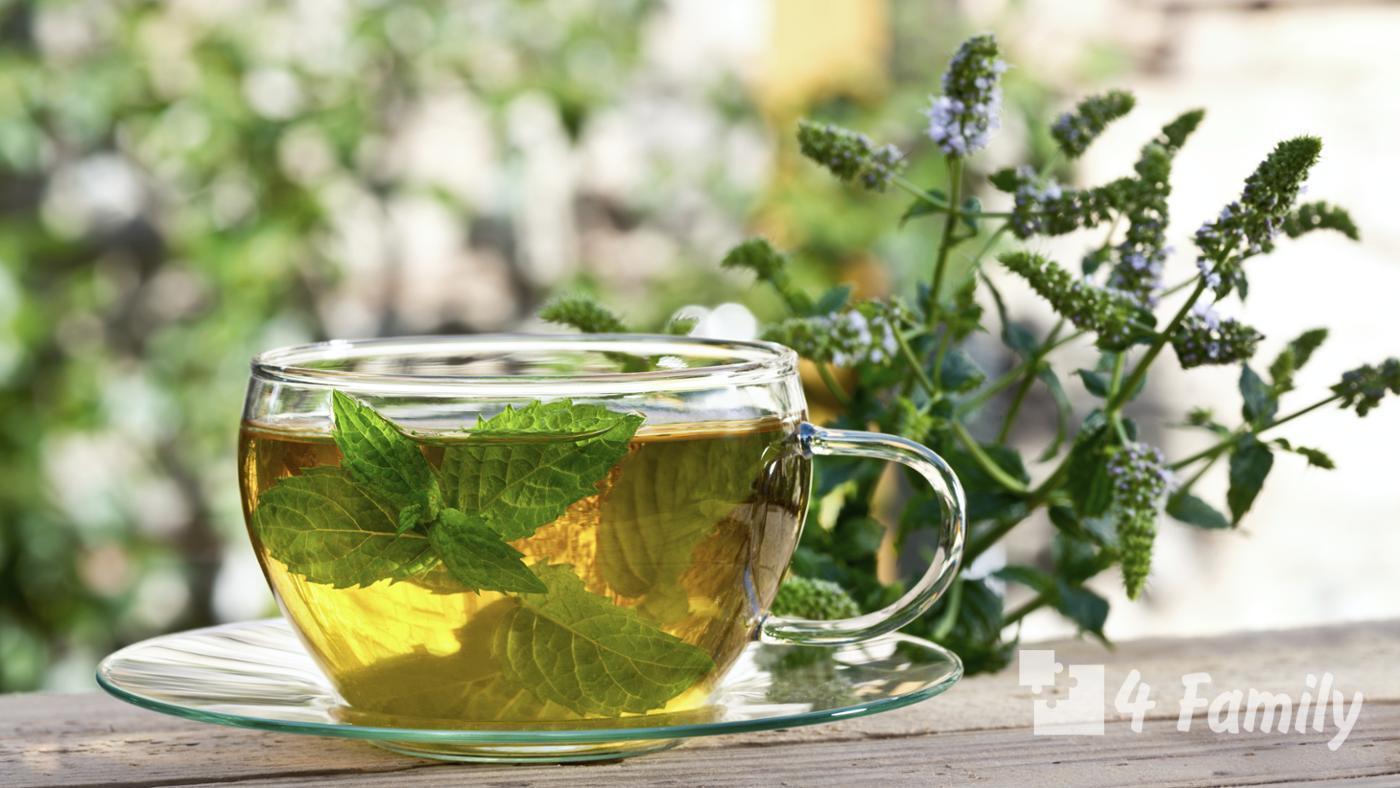 Чай с мятой полезные свойства и противопоказания