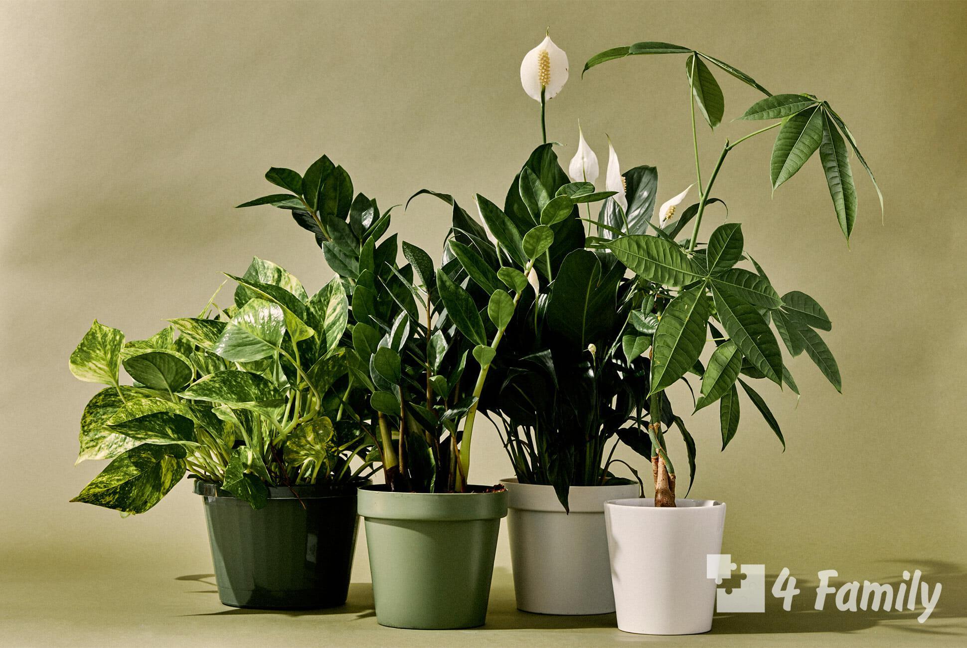 Фото. Комнатные растения, за которыми легко ухаживать