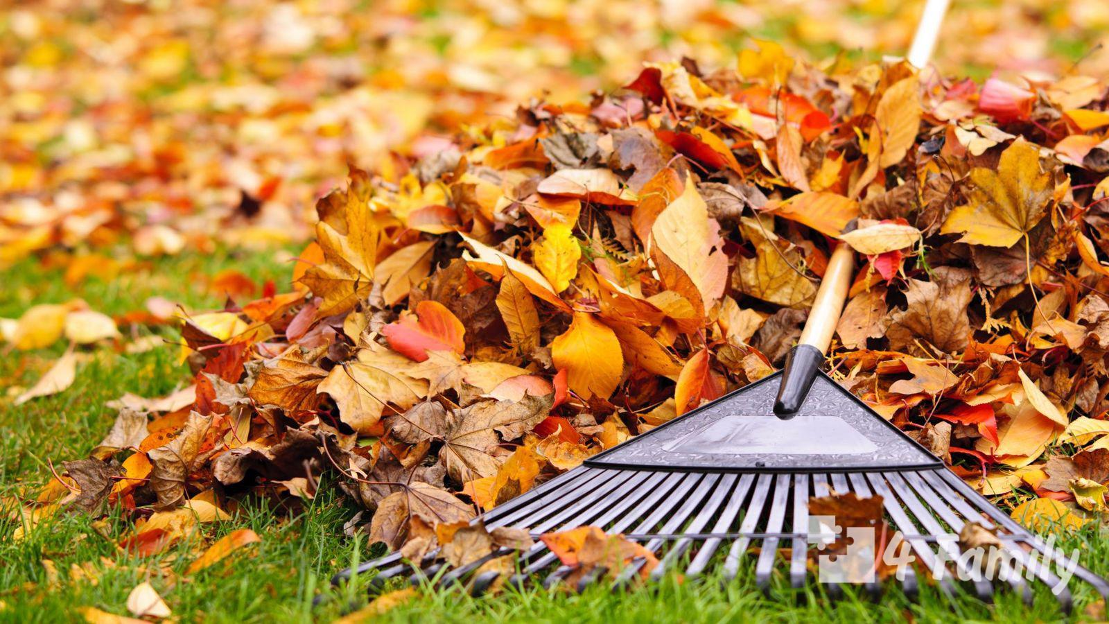 Почему не нужно выбрасывать опавшие листья из вашего сада