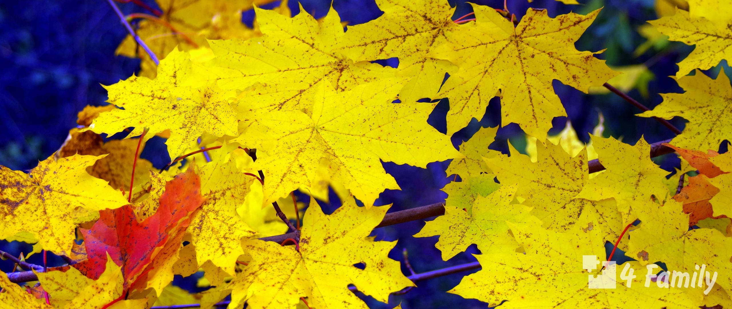 4family Почему не нужно выбрасывать опавшие листья из вашего сада