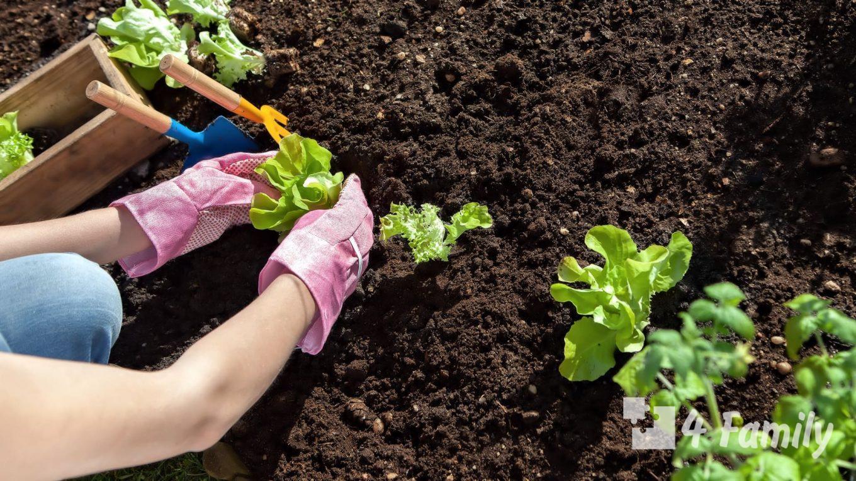4family Вещи, которые вы делаете в огороде зря