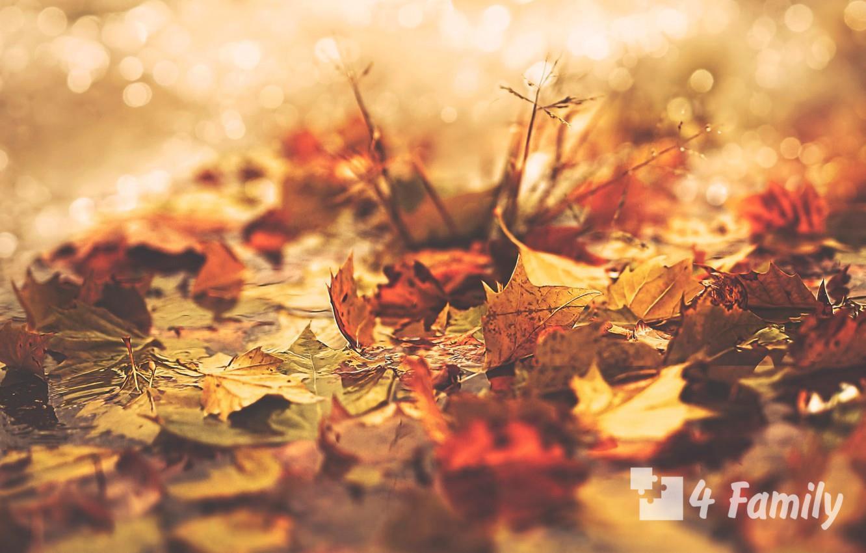 4family Как использовать опавшие листья в саду или на участке