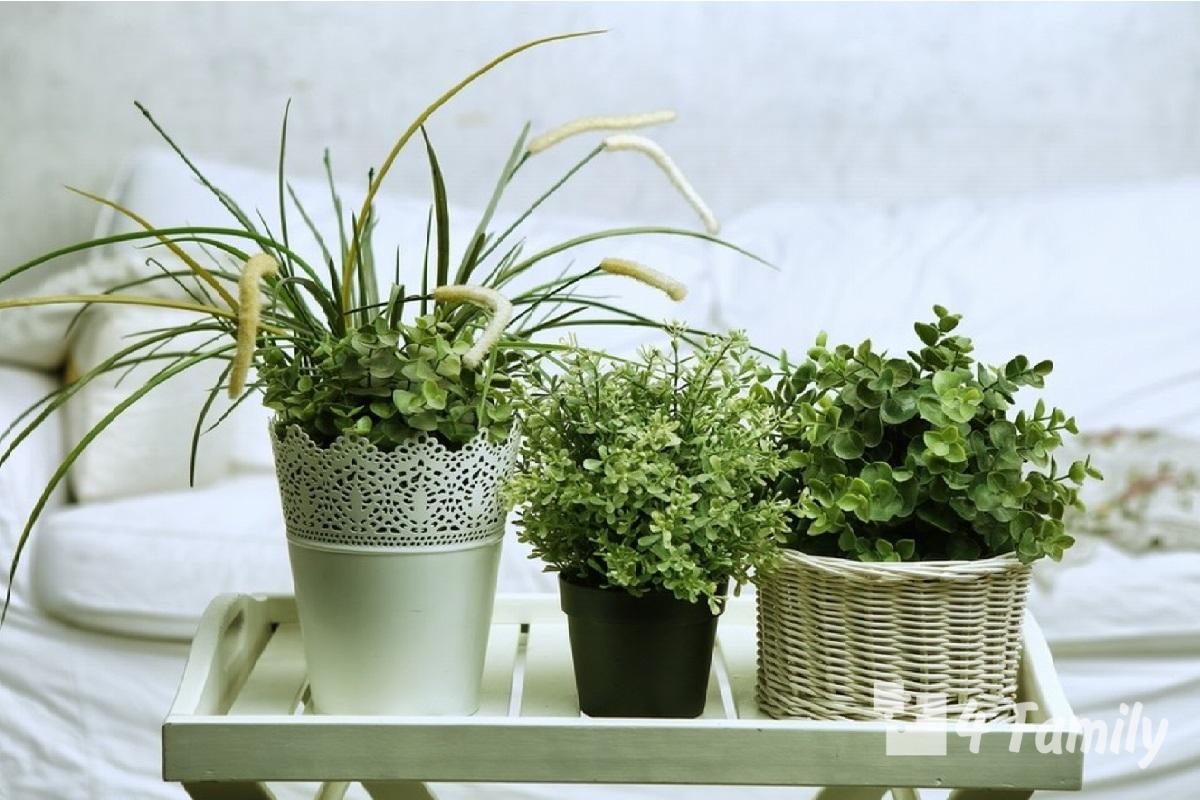 Какие комнатные растения помогают быстрее уснуть
