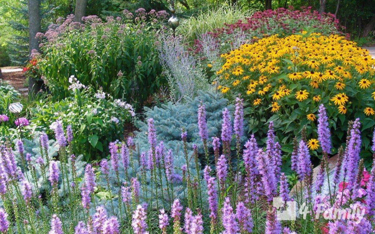 4family Многолетние цветы для дачи